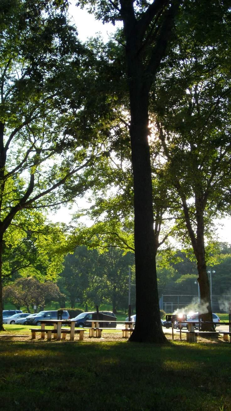 The Mighty tree runs tall